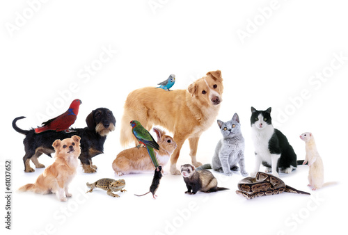 Poster Papegaai Gruppe verschiedene Haustiere