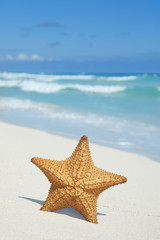 Starfish on beach with blue ocean, waves and sky