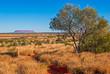 Zdjęcia na płótnie, fototapety, obrazy : Australian bush (outback)