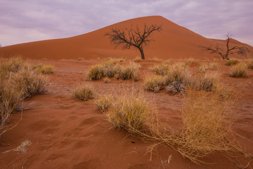 Dead Tree in cloudy Sossusvlei, Namibia