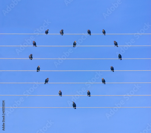 Many birds sitting at wires in form of heart