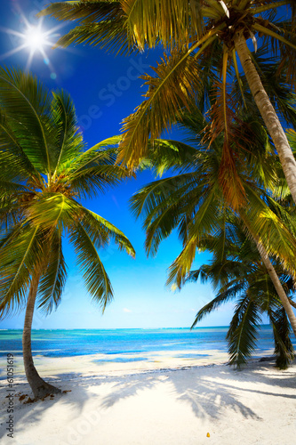 art summer Untouched tropical beach