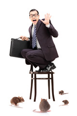 Terrified businessman standing on chair durring rat invasion
