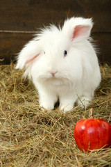 White cute rabbit with apple on hay