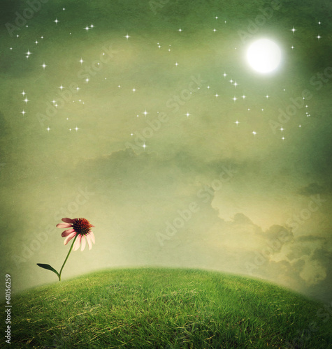 One echinacea flower under the moon
