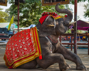 elephant show in thailand
