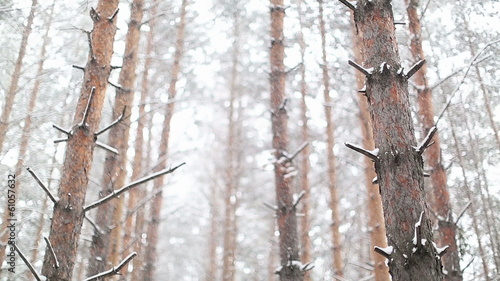 Snowstorm in the Dense Forest