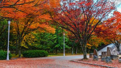Osaka Castle garden in autumn in Japan