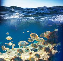 Podwodne ryb