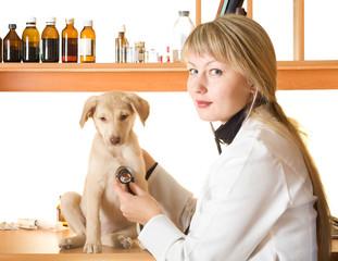 vet examines a puppy