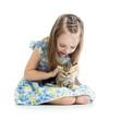 kid girl playing with Scottish kitten