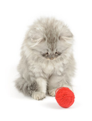 kitten looking at red clew