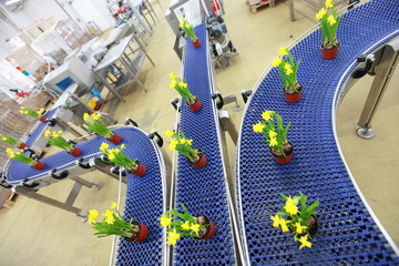 flowers on conveyor belt,production line,contemporary business