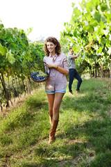 girl harvesting grapes under sunset light