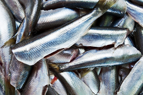 Fresh crude anchovies
