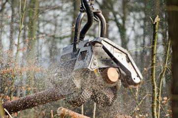 Arbeitskopf eines Holzvollernters