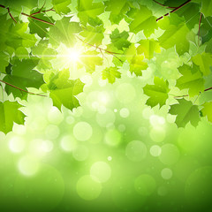 Natural green background. Vector