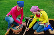 Gardening, sowing seeds to the soil