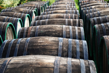 Rows of wine oak barrels lying