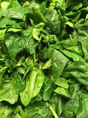 spinaci freschi sl mercato