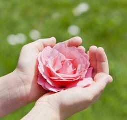 Kinderhände mit Rose