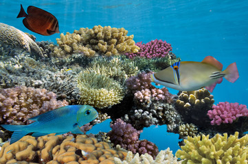 colorful coral reef with hard coral and exotic fish