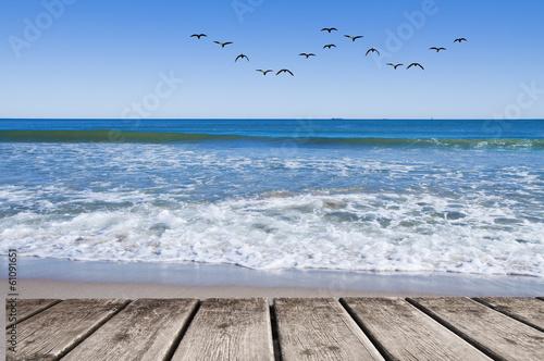 Fotobehang Een Hoekje om te Dromen bandada de gabiotas sobre el mar
