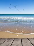 las gabiotas en la playa azul