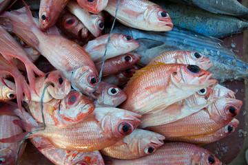 Fresh fishes at the fish market on the beach
