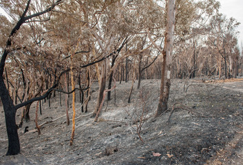 Australian forest fire