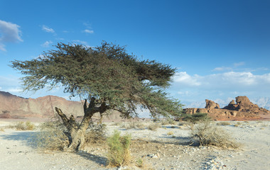 View on valley of geological Timna park, 25 km north of Eilat