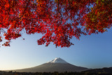 Fototapety Mount Fuji with red autumn leaf. Japan
