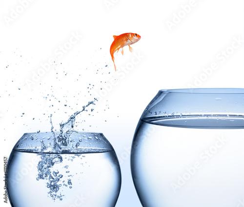 Leinwandbild Motiv goldfish jumping out of the water - improvement concept