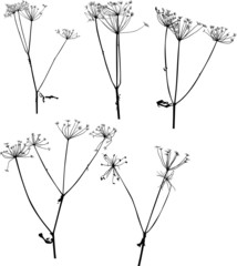 set of five dry autumn plants isolated on white