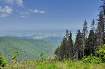 Clearcut forestry in Carpathians mountains