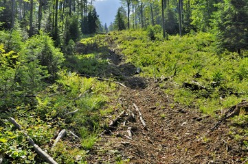 Wood exploitation funicular path