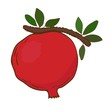 Pomegranate on branch in vector