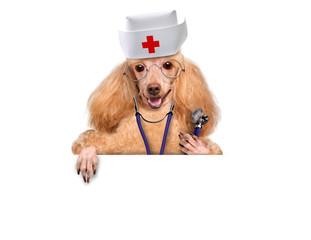 Dr. Dog at the white banner