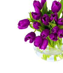 Bouquet of purple colorful tulips
