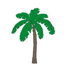 Banana tree in vector