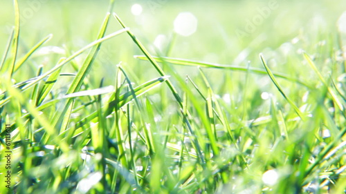 blurred grass background with water drops and rays of sun.