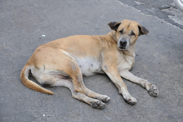 Single lost strayed dog sleeping on street