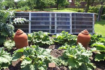 Rhubarb terracotta forcing pots