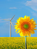sunflower and wind power