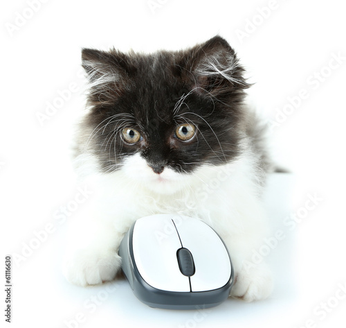 Little cute kitten and computer mouse, isolated on white