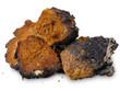 Chaga (Inonotus obliquus) - medicinal birch fungus - 61121890