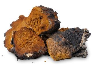 Chaga (Inonotus obliquus) - medicinal birch fungus