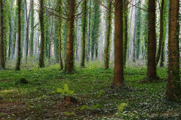 Mystischer Wald mit Lichtreflexen