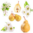 Spring flowers and pear isolated on white isolated