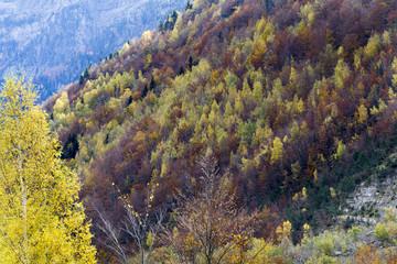 Autumn in Pineta valley in Pyrenees Aragones